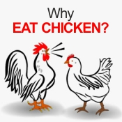 Chicken Facts